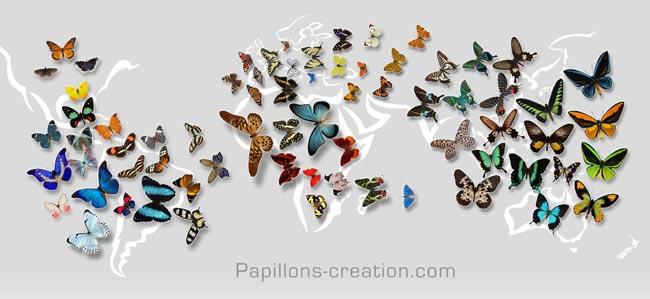 papillons-carte