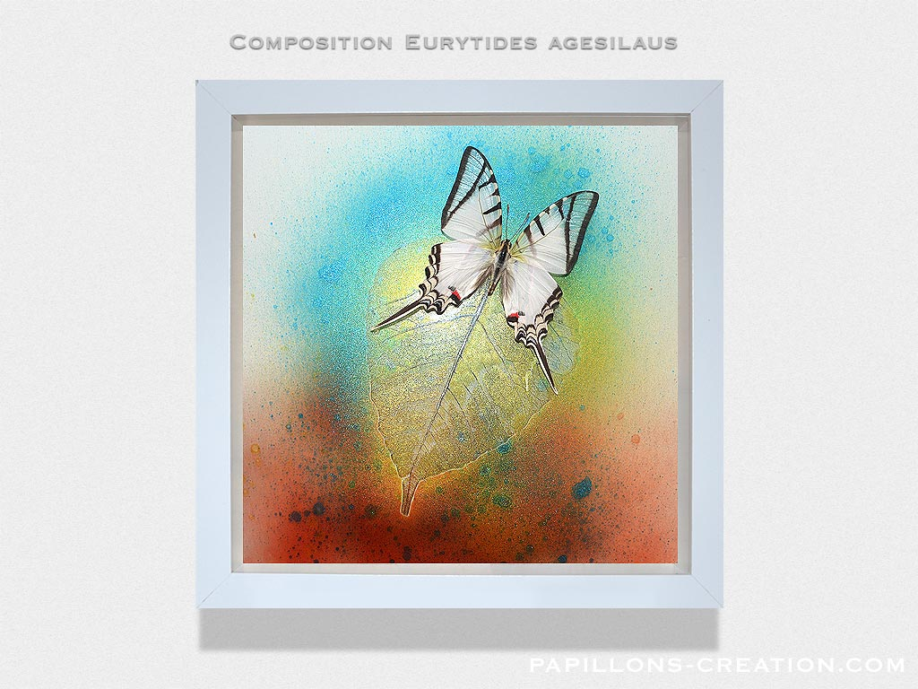 Composition Eurytides agesilaus