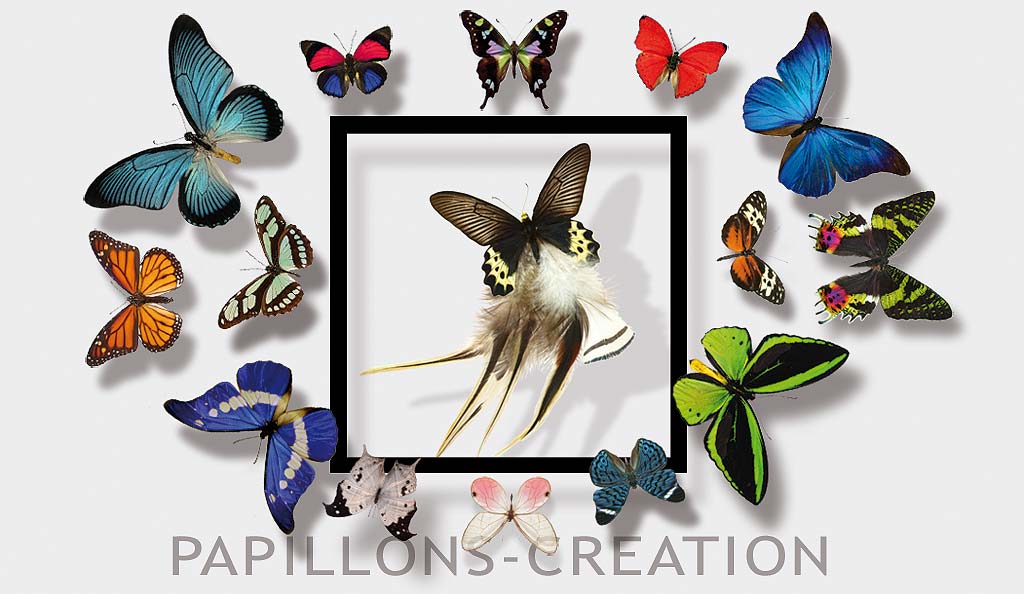 exposition papillons creation